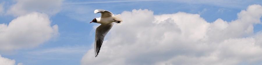 letící pták